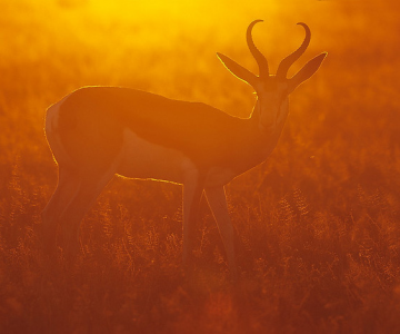 Cand lumina vine din spate: 30 de fotografii grozave!