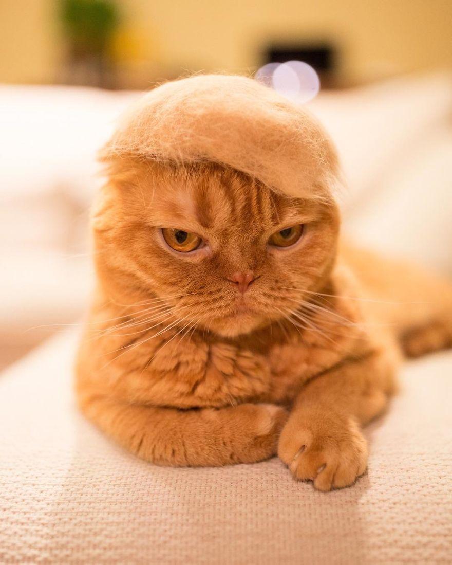 Cochete si haioase: Pisici cu palarii blanoase - Poza 1