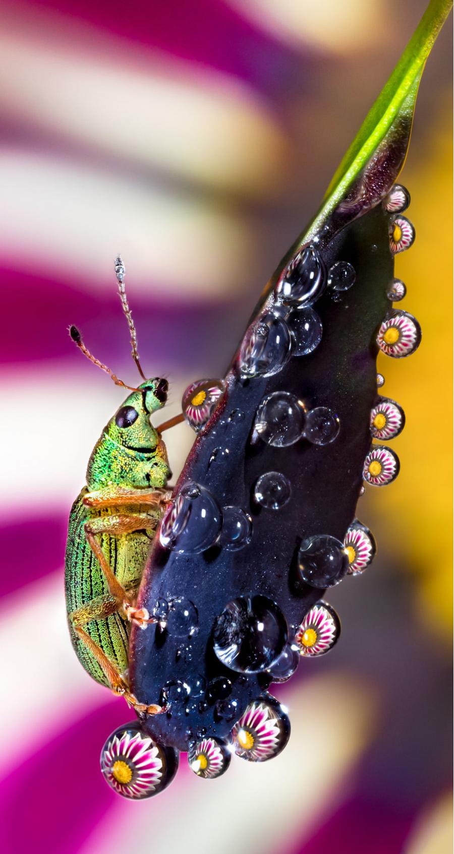 Cum se oglindeste frumusetea naturii in picaturi limpezi de apa - Poza 8