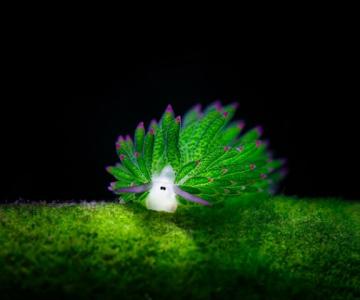 Oitele de mare, cele mai simpatice creaturi din mediul acvatic