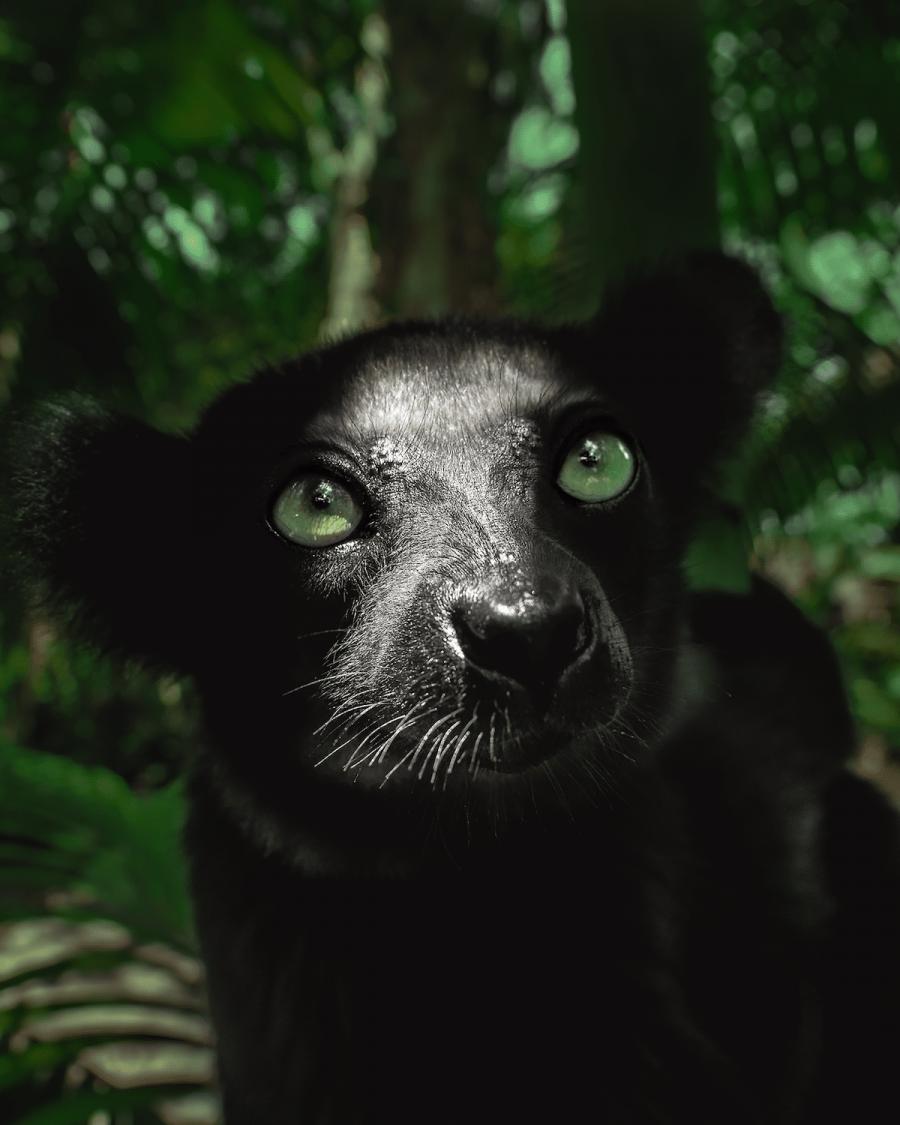 Frumusetea salbaticiei din Madagascar, in poze uluitoare - Poza 1