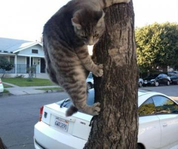Pisici care apar de unde nu te astepti