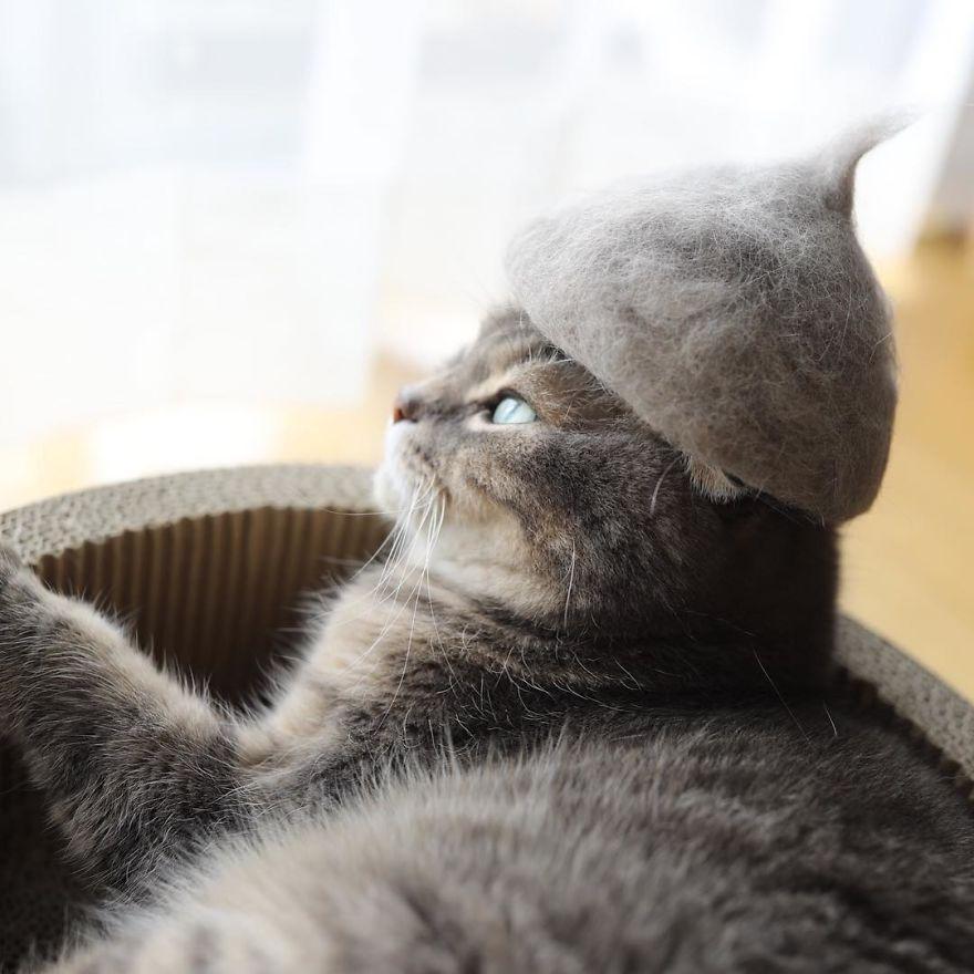 Cochete si haioase: Pisici cu palarii blanoase - Poza 5