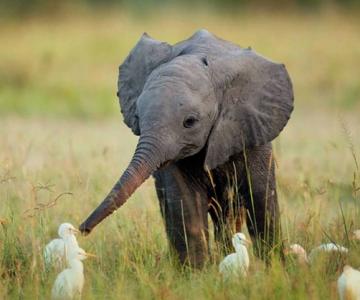 15 pui de animale bucurosi de primavara