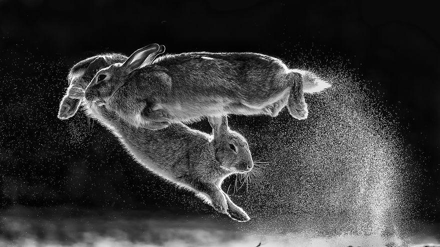 Cele mai bune fotografii cu si despre natura din 2019 - Poza 2