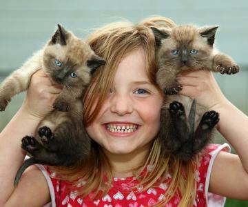 40 de poze cu... pisicute!