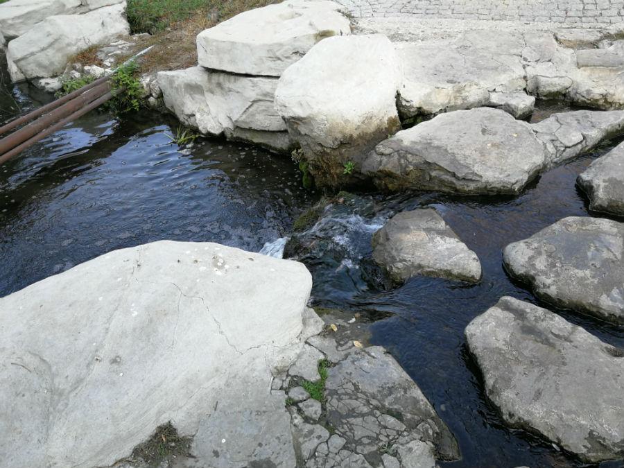 Parcul Nicolae Romanescu: Minunea verde din Banie, in poze superbe - Poza 9