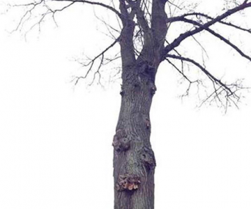 Iluzie optica: Un copac plutitor in Germania