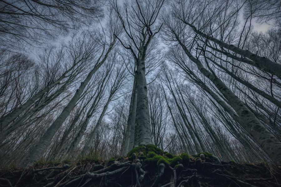 Splendoarea arborilor centenari, in urcusul lor spre cer - Poza 3