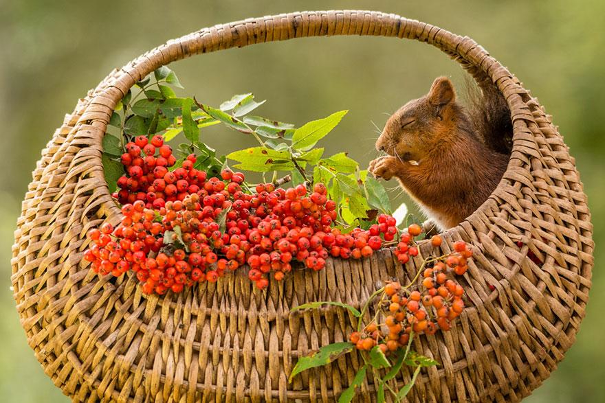 Frumoasa poveste cu veverite roscate, intr-un pictorial adorabil - Poza 6
