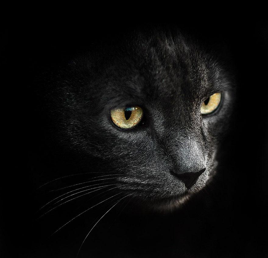Portrete superbe de animale, de Sergey Polyushko - Poza 2