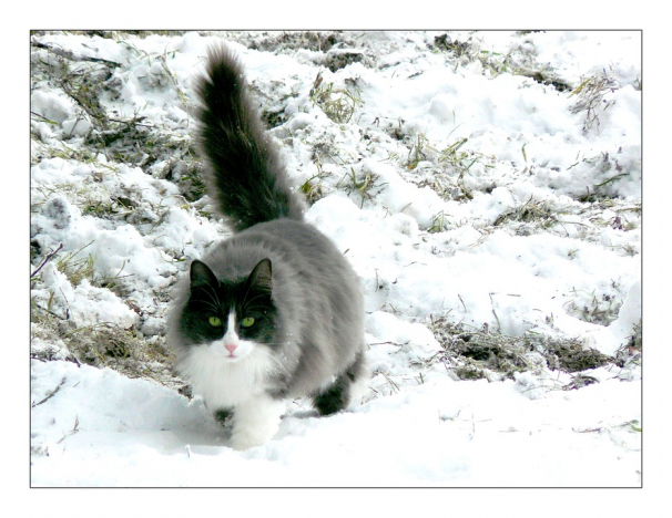 Ce-ti transmite pisica prin pozitia cozii - Poza 1