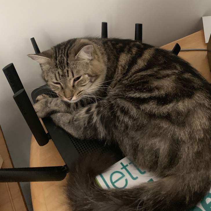 Pisici puse pe rele, in poze haioase - Poza 10