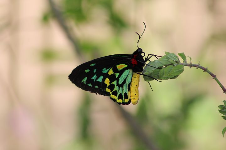 Cei mai frumosi fluturi din lume, in poze spectaculoase - Poza 12