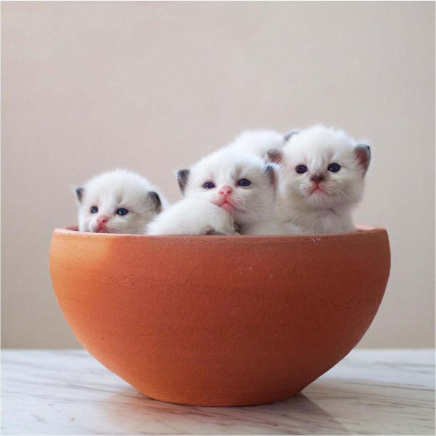 Cele mai frumoase poze cu pisici - Poza 2