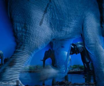 Cele mai bune fotografii din natura pe 2013