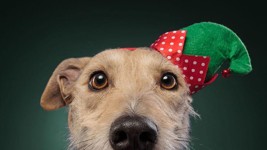 Cel mai bun prieten al omului, in ipostaze festive - Poza 12