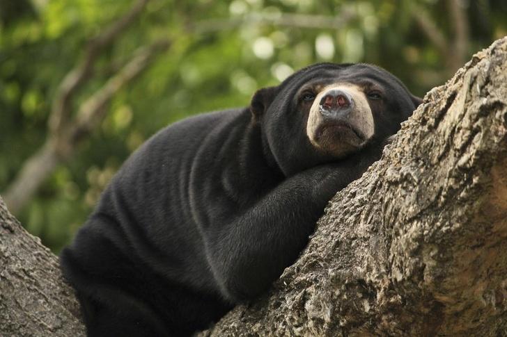 Cele mai simpatice animale lenese, in poze adorabile - Poza 13