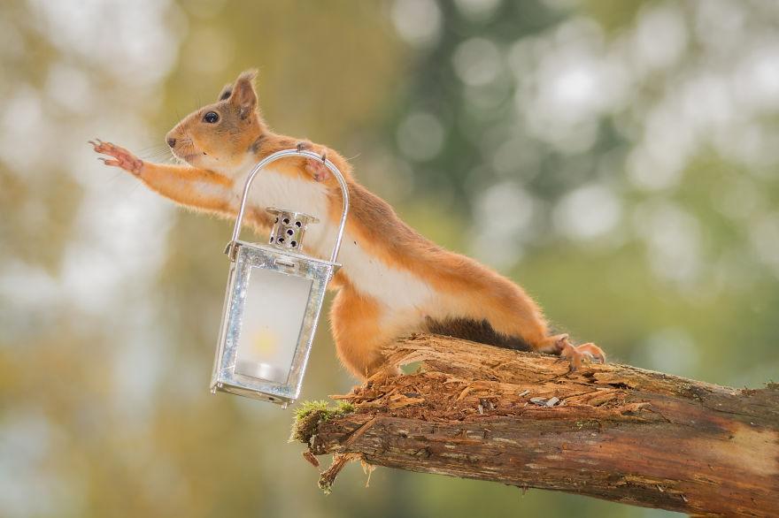 Frumoasa poveste cu veverite roscate, intr-un pictorial adorabil - Poza 10