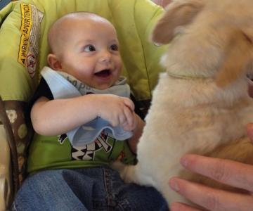 Bebelusi si catei, la prima intalnire
