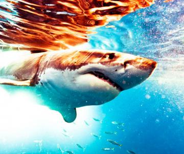 La plimbare cu rechinii, impreuna cu Michael Muller