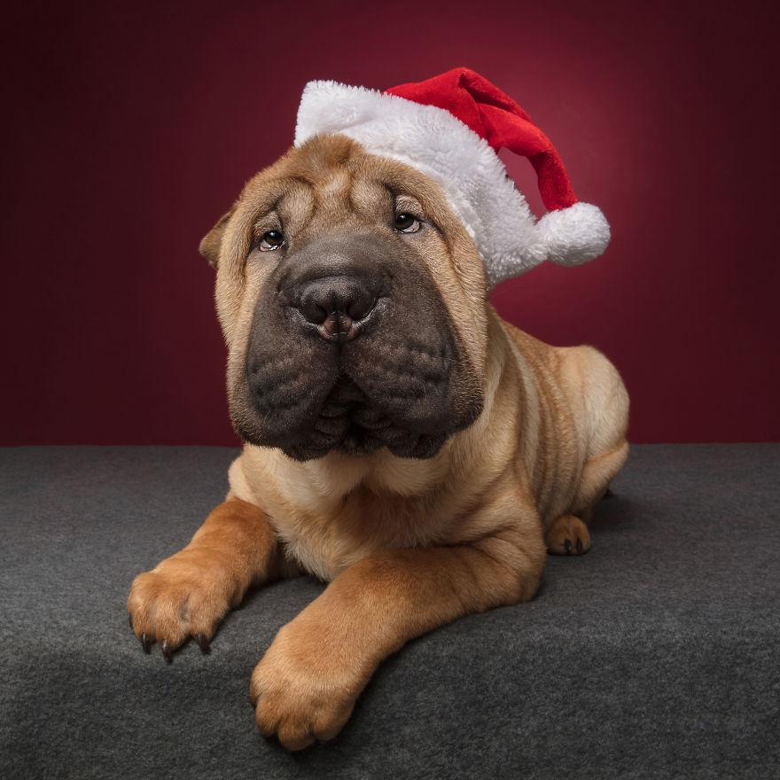 Cel mai bun prieten al omului, in ipostaze festive - Poza 7