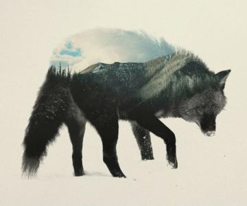 Frumuseti ireale: Cum se oglindeste natura pe trupul animalelor salbat