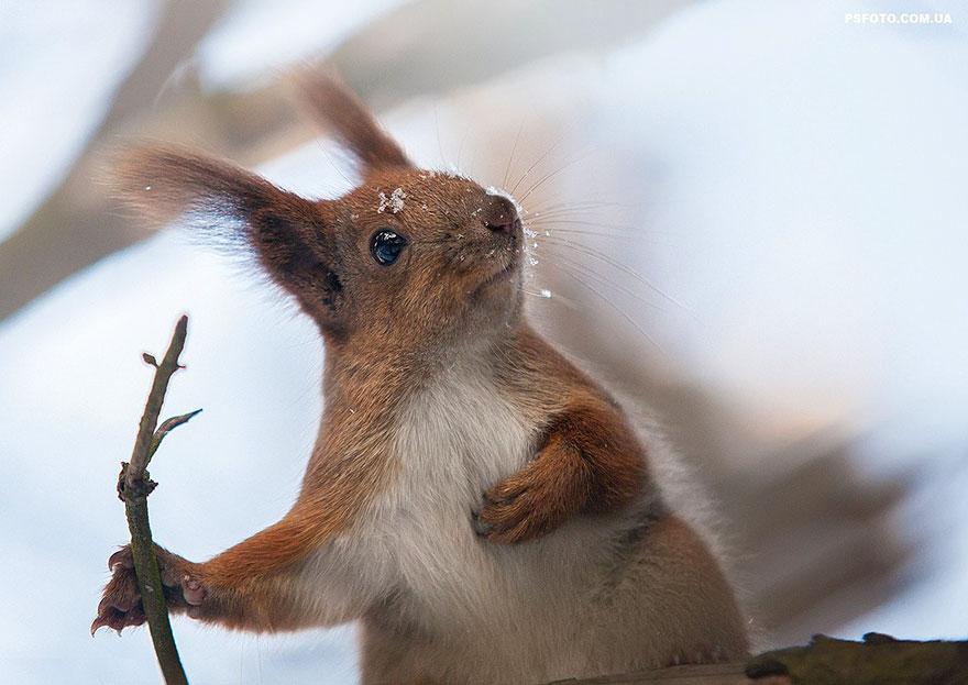 Portrete superbe de animale, de Sergey Polyushko - Poza 7