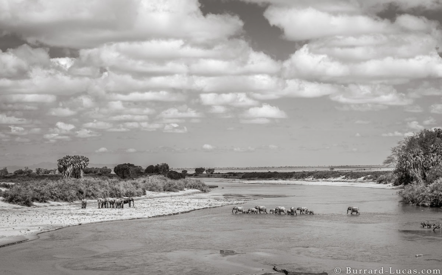 """Povestea ultimelor fotografii cu """"Regina elefantilor"""" - Poza 5"""