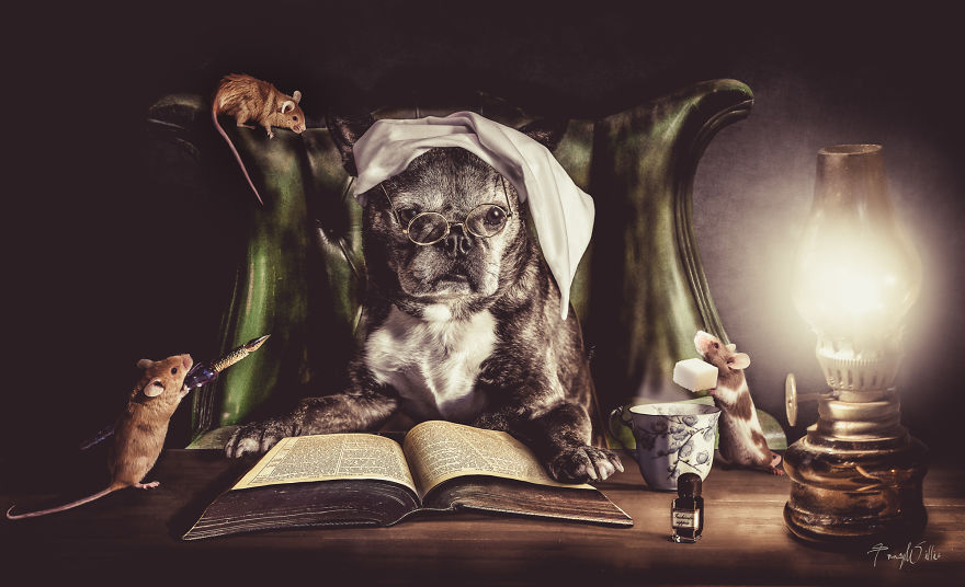 Povesti cu animalute haioase, in poze suprarealiste - Poza 2