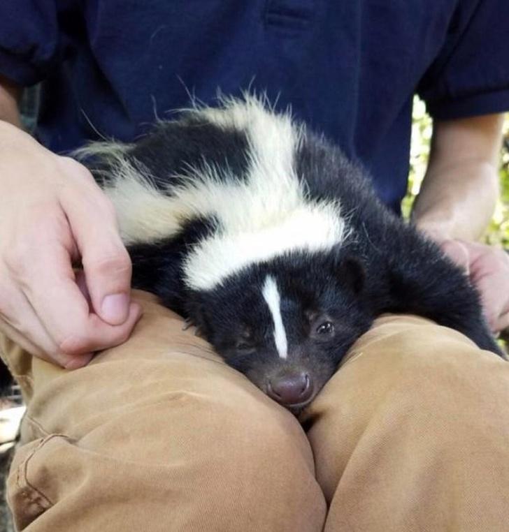 Cele mai simpatice animale lenese, in poze adorabile - Poza 11