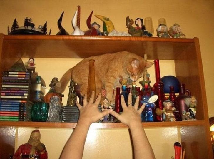 Pisici puse pe rele, in poze haioase - Poza 7