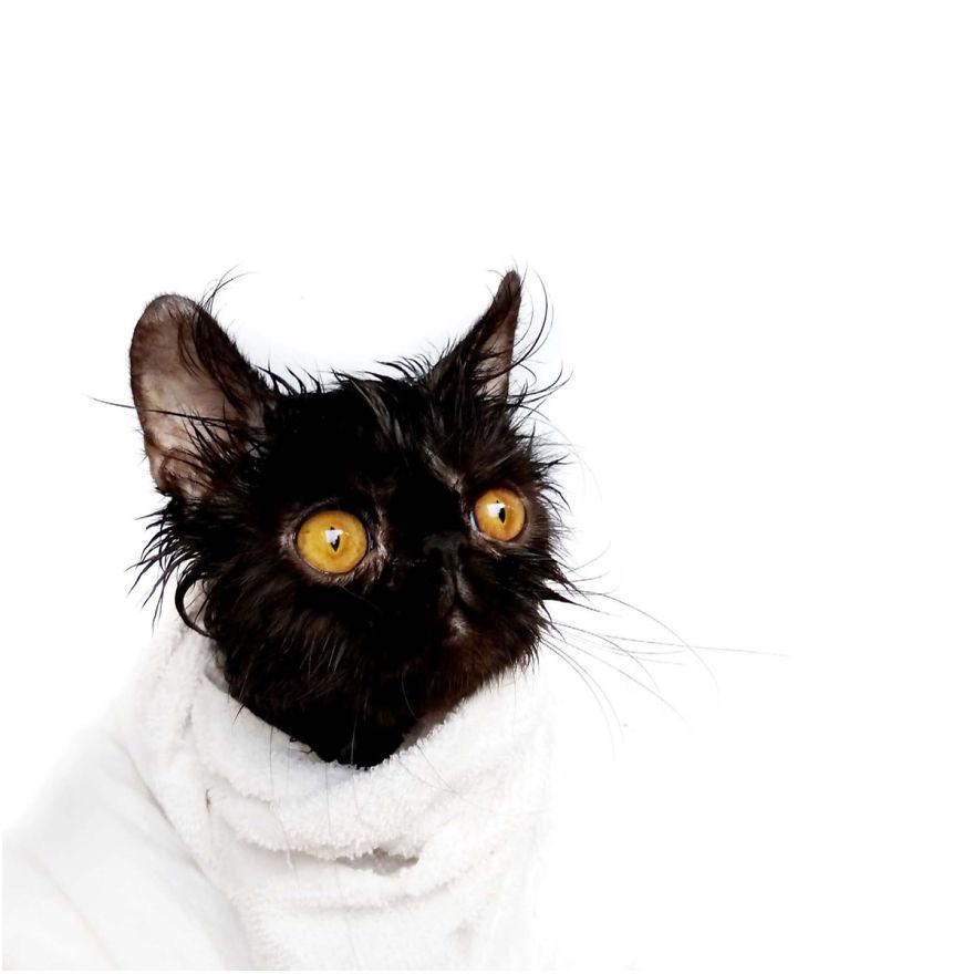 Cele mai frumoase poze cu pisici - Poza 17