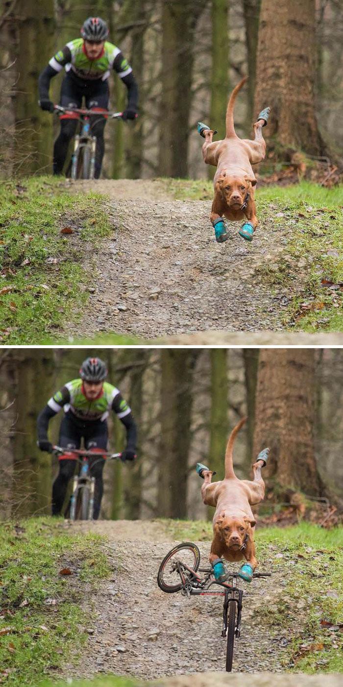 Cele mai amuzante poze prelucrate in Photoshop - Poza 9