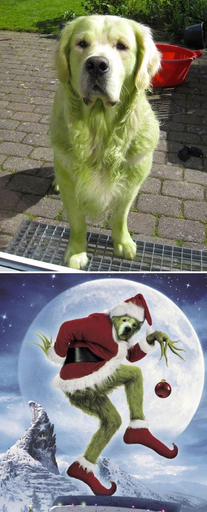 Cele mai amuzante poze prelucrate in Photoshop - Poza 11