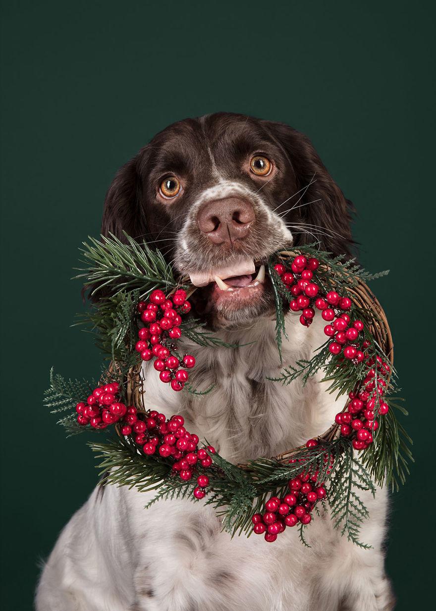 Cel mai bun prieten al omului, in ipostaze festive - Poza 9