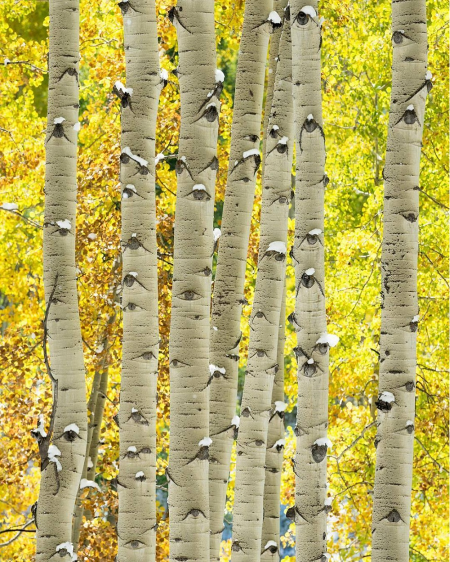 Perfectiunea naturii, in poze sublime - Poza 4