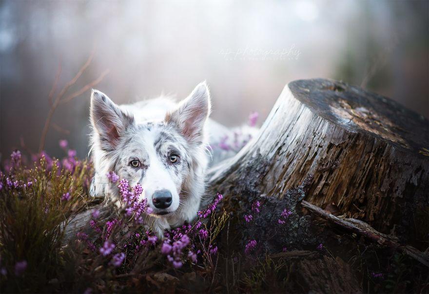 Bucuria sufletului frumos de caine, in poze superbe - Poza 21