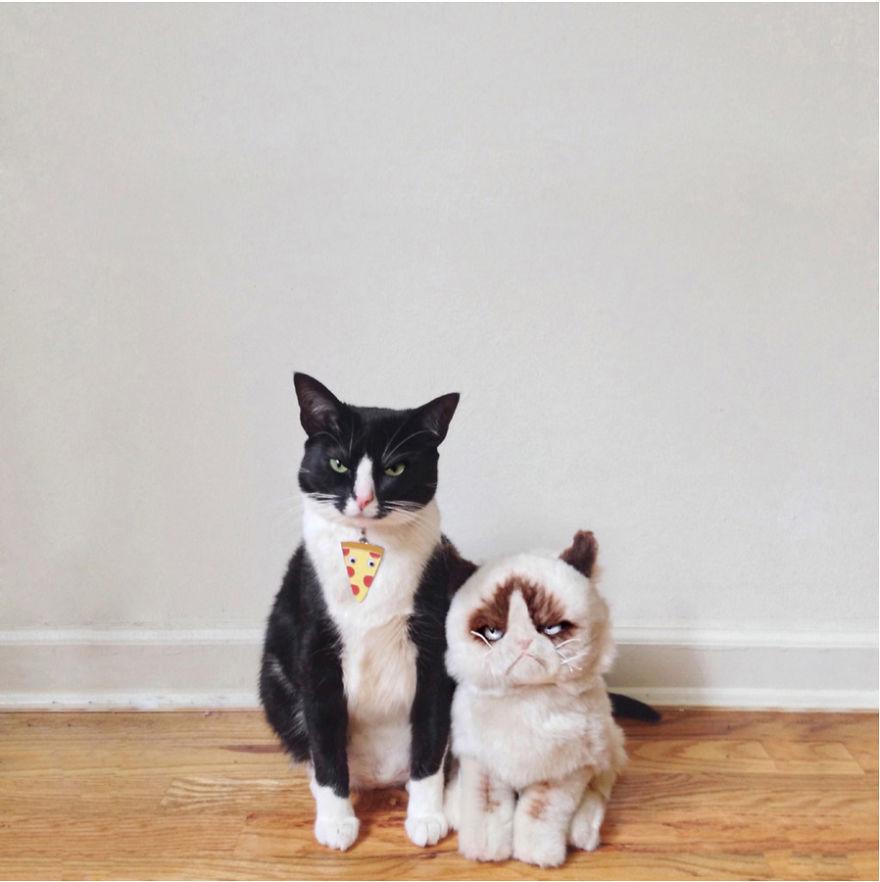 Cele mai frumoase poze cu pisici - Poza 31