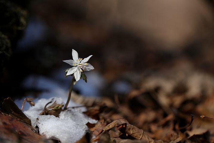 Gingasia florilor de primavara in poze superbe - Poza 15