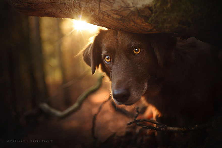 Portrete autumnale de suflet, de Anne Geier - Poza 9