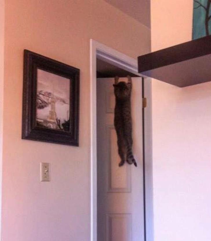 Pisicile chiar au simtul umorului. Avem dovada! - Poza 6