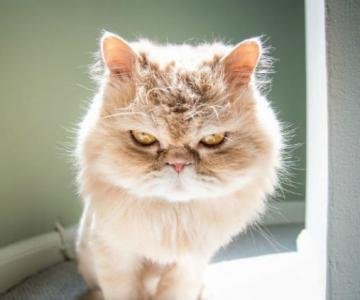 Expresiile pisicilor, in poze sugestive