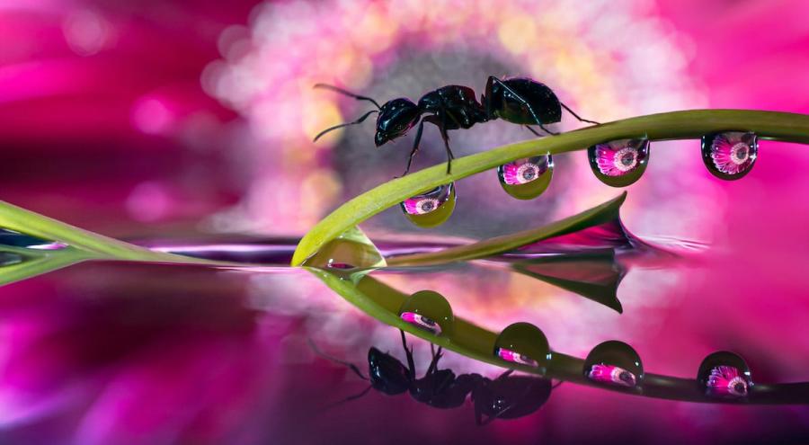 Cum se oglindeste frumusetea naturii in picaturi limpezi de apa - Poza 10