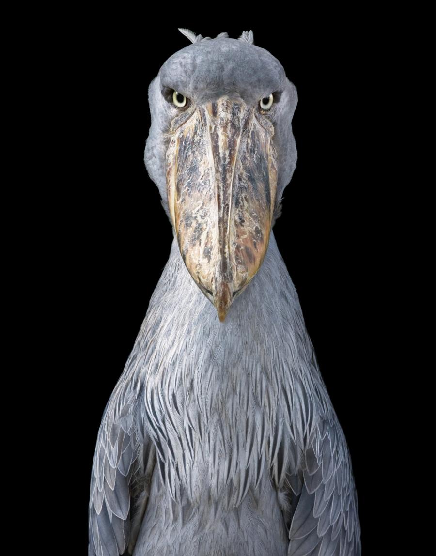 Frumusetea pasarilor rare, in poze fascinante - Poza 7