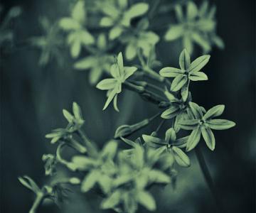 Toate florile lui Guido Tamburro