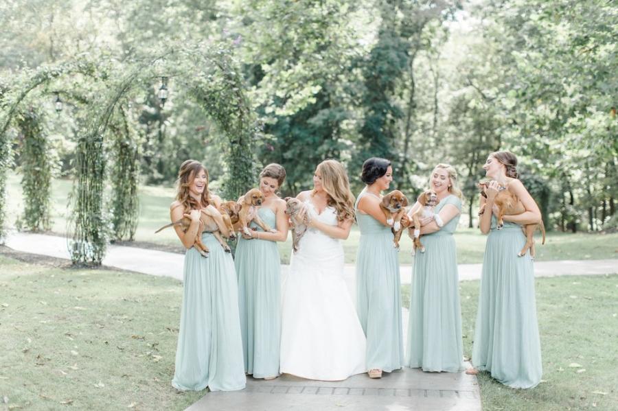 Cum arata imaginile de la nunta unui cuplu iubitor de animale? - Poza 7