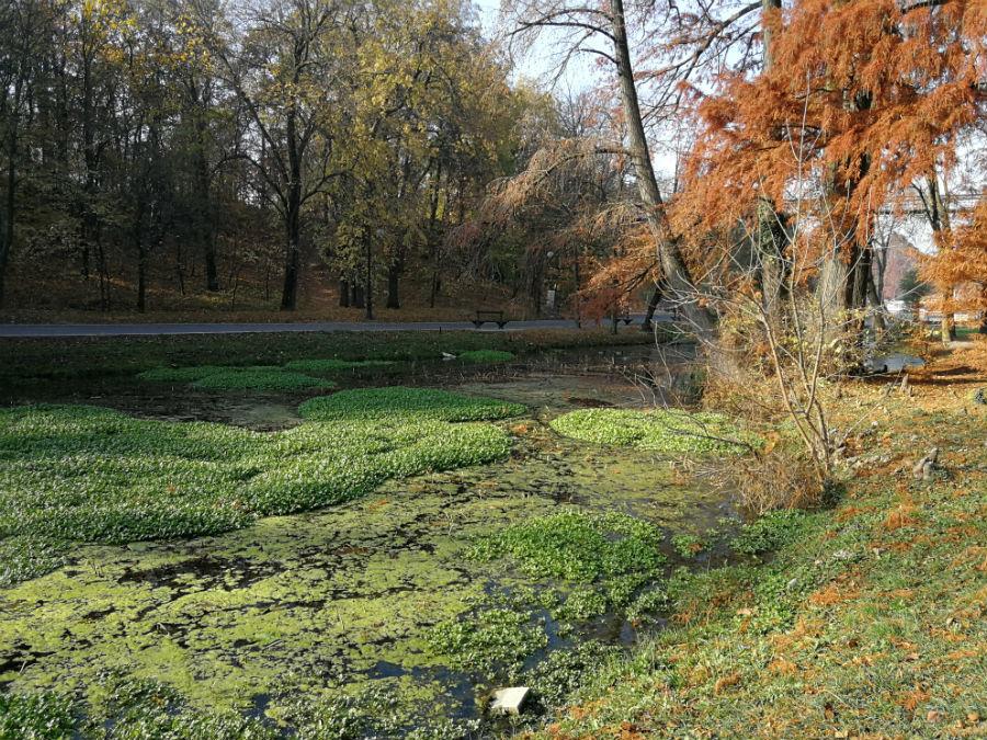 Parcul Nicolae Romanescu: Minunea verde din Banie, in poze superbe - Poza 5