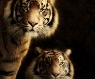 Portrete de animale umanizate, de Cally Whitham