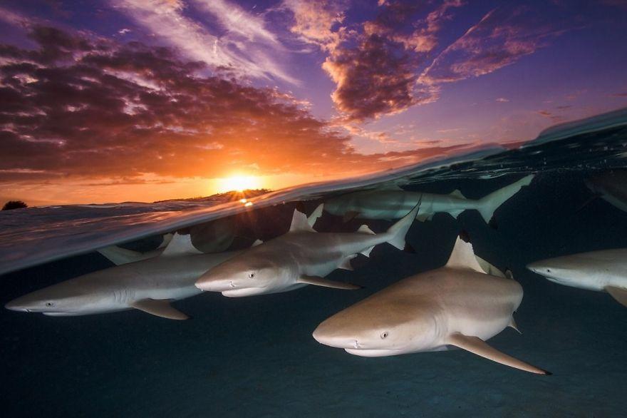 Fotografii superbe din uimitoarea lume subacvatica - Poza 8